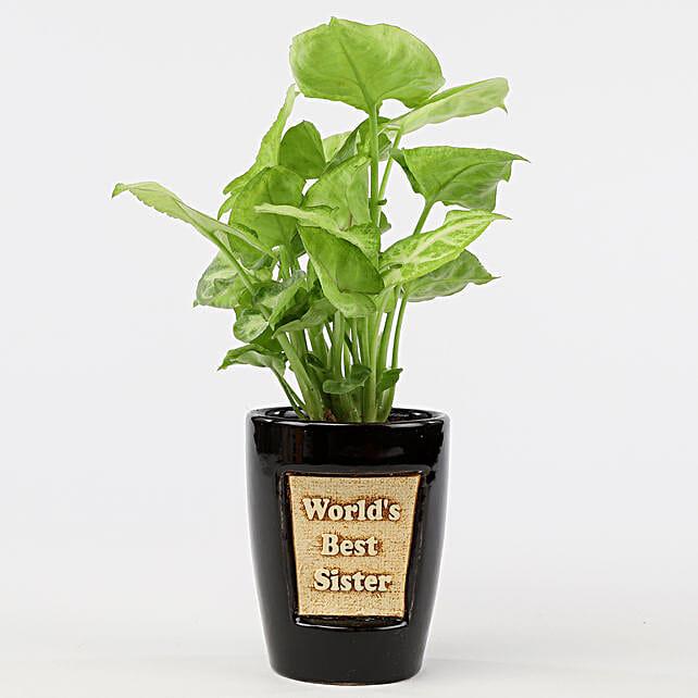 Syngonium Plant In World's Best Sister 3D Pot: Plants For Raksha Bandhan