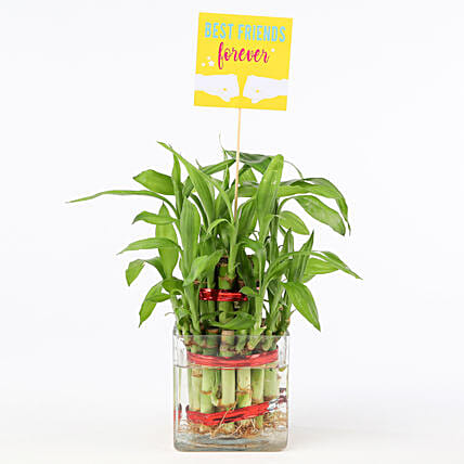 Friends Forever Two Layer Bamboo Plant: Lucky Bamboo Plants