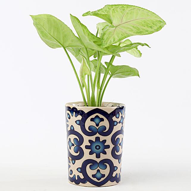 Golden Syngonium In Blue Ceramic Pot: Air Purifying Plants