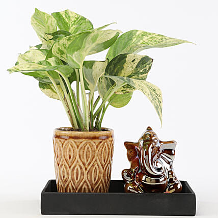 Marble Money Queen Plant In Ceramic Platter: Ganesh Chaturthi Gifts