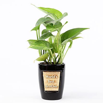 Money Plant In World's Best Brother 3D Pot: Ornamental Plant Gifts