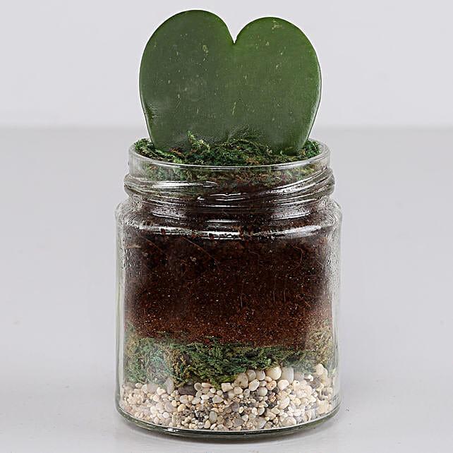 Hoya Plant Jar Terrarium: Terrariums Plants