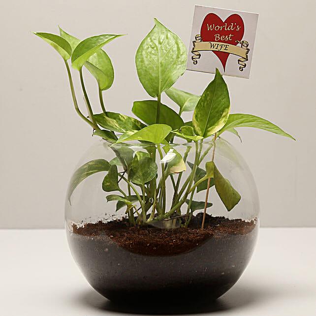 Money Plant For Best Wife: Money Tree