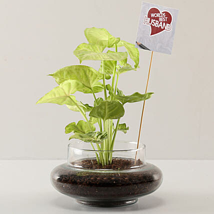 Syngonium Plant For Best Husband: Send Plants to Bangalore