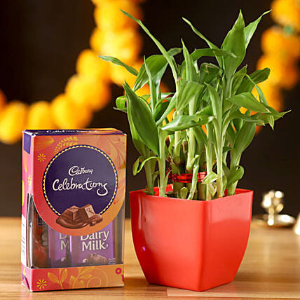 2 Layer Lucky Bamboo With Cadbury Celebrations: Lucky Bamboo Plants