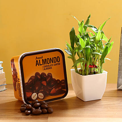 2 Layer Bamboo & Amul Wafers: Plant Combos