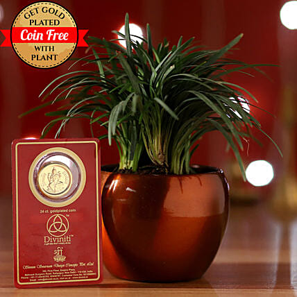 China Grass & Free Gold Plated Coin: Gifts to Sultanpur
