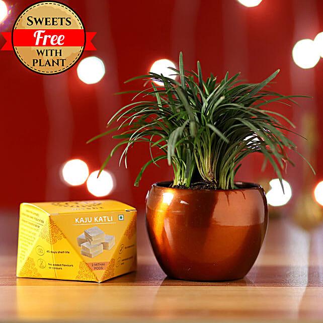 China Grass & Kaju Katli Combo: Send Gifts to Sultanpur