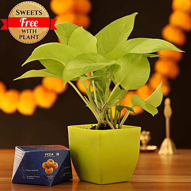 Golden Money Plant & Peda Sweet: Send Diwali Sweets to Jalandhar