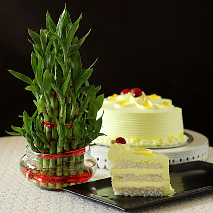 Butterscotch Cake With Three Layer Bamboo Plant: Cakes N Plants