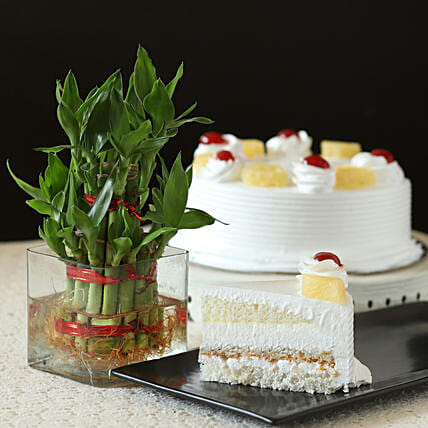 Pineapple Cake With Lucky Bamboo Plant: Cakes Combo