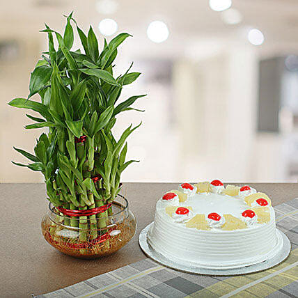 Pineapple Cake With Three Layer Bamboo Plant: Cakes Combo