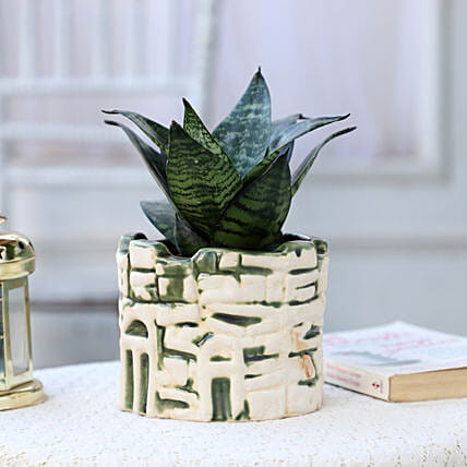 Snakeskin Sansevieria In Ceramic Green Pot: Air Purifying Plants
