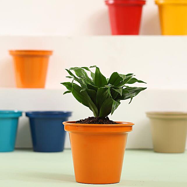 Dracaena Plant In Orange Metal Pot: Send Shrubs