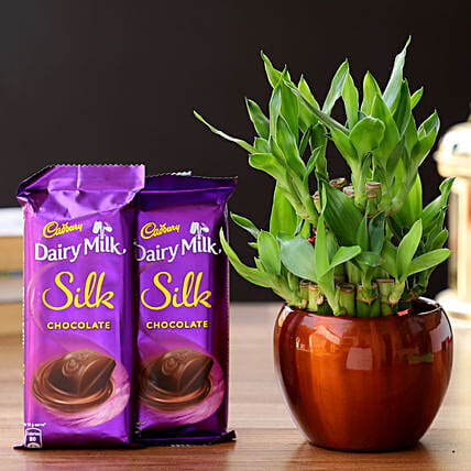 2 Layer Bamboo In Brass Pot & Cadbury Chocolates: