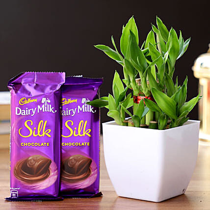 2 Layer Bamboo Plant & Dairy Milk Silk Chocolates: