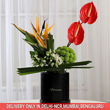 Exotic Box of Anthuriums & Bird of Paradise: Send Anthuriums