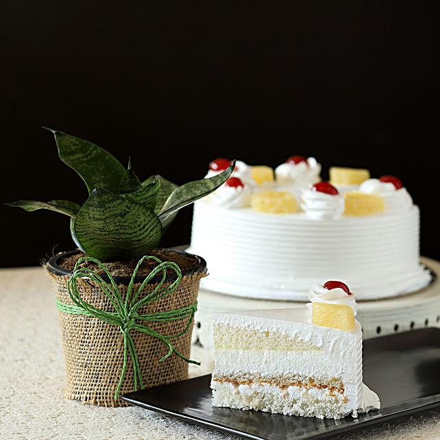Sansevieria Plant & Eggless Cake Combo: Buy Christmas Plants