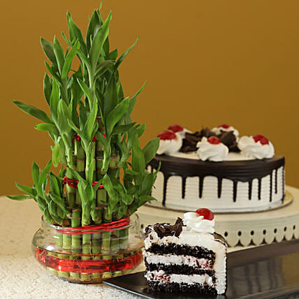 3 Layer Bamboo & Eggless Black Forest Cake: Plants for Christmas