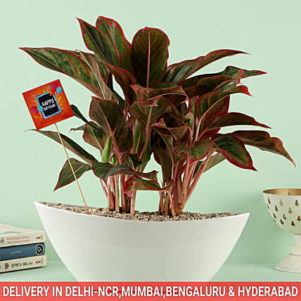 Birthday Special Regally Yours Bouquet in Dish Pot: Plants Delivery Today