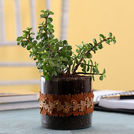 Jade Plant in Cylinder Glass Pot with Flower Lace: Terrariums Plants