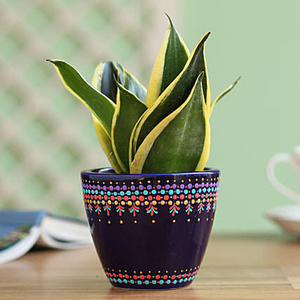 Sansevieria Plant in Hand Painted Dot Planter: Teddy Day Gifts