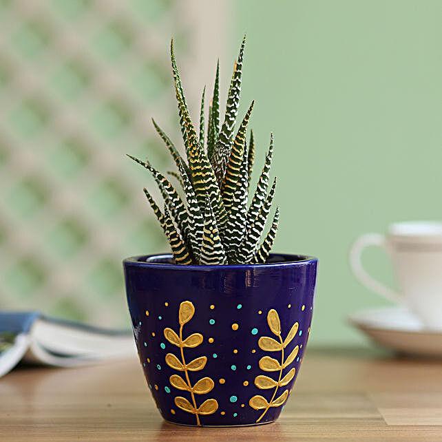 Zebra Haworthia Plant in Hand Painted Planter: Cactus and Succulents Plants