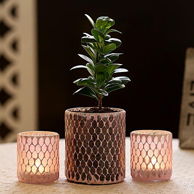 Ficus Compacta Plant In Mosaic Art Glass Pot & 2 Votive Holders: Gift Ideas