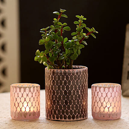 Jade Plant in Diamond Cut Mosaic Art Glass Pot & 2 Votive Holders: Gift Ideas