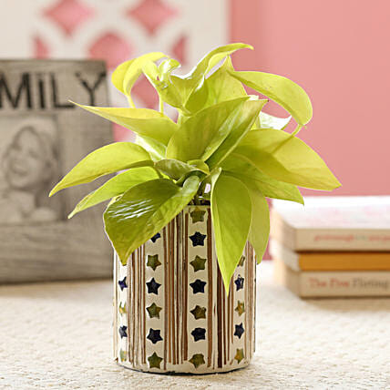 Neon Money Plant In Star Mosaic Art Glass Pot: Ornamental Plant Gifts