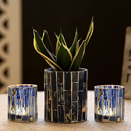 Sansevieria In Blue Mosaic Art Pot & 2 Votive Holders: Ornamental Plant Gifts