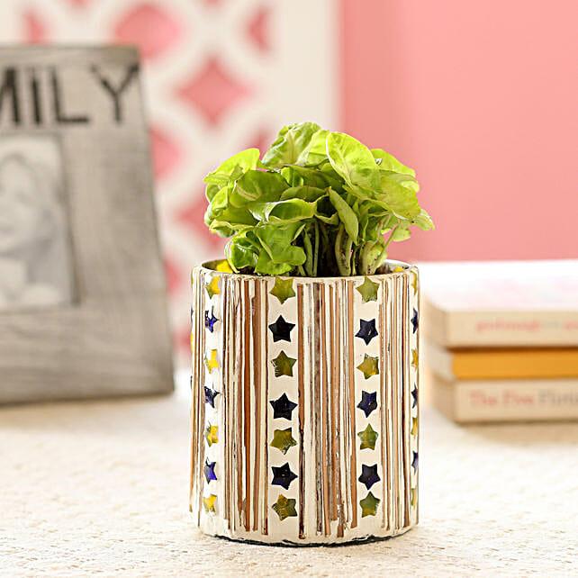 Syngonium Plant In Star Mosaic Art Glass Pot: Buy Indoor Plants