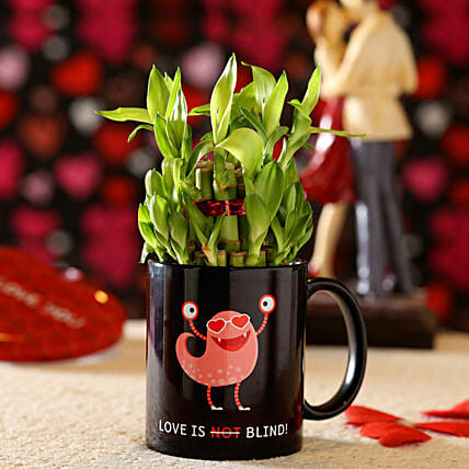 Lucky Bamboo In Quirky Love Bug Mug: Ornamental Plant Gifts