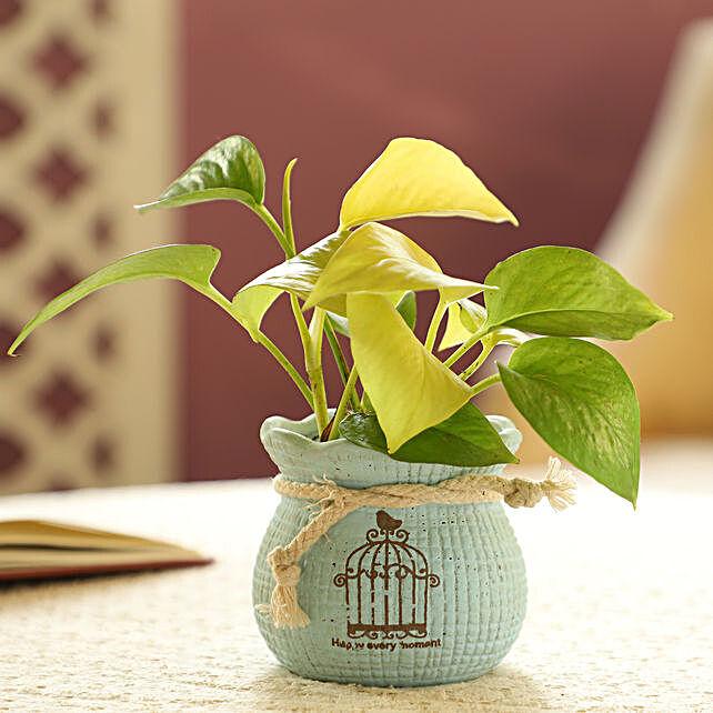 Money Plant In Blue Pot: Pots for Plants