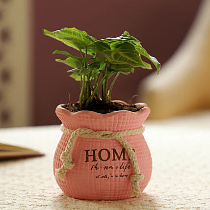 Syngonium Plant In Pink Pot: Pots and Planters