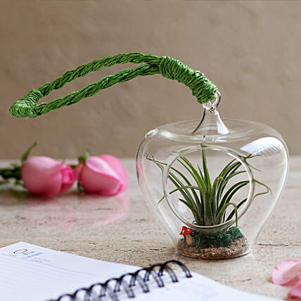 Tilandsia Air Plant in Glass Heart: Terrariums Plants