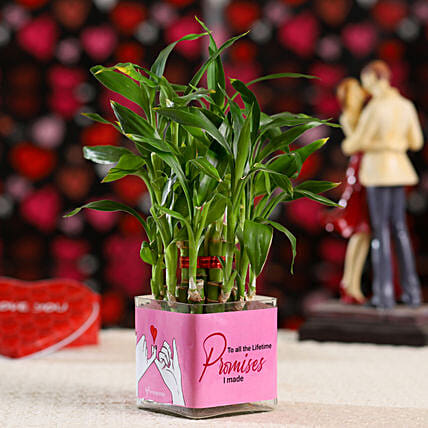 2 Layer Bamboo Plant For Promise Day: Lucky Bamboo Plants