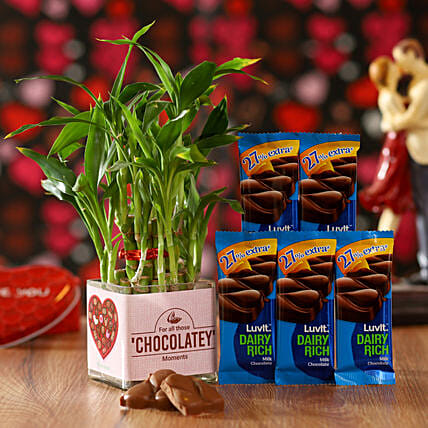Bamboo Plant & LuvIt Chocolates: Lucky Bamboo Plants