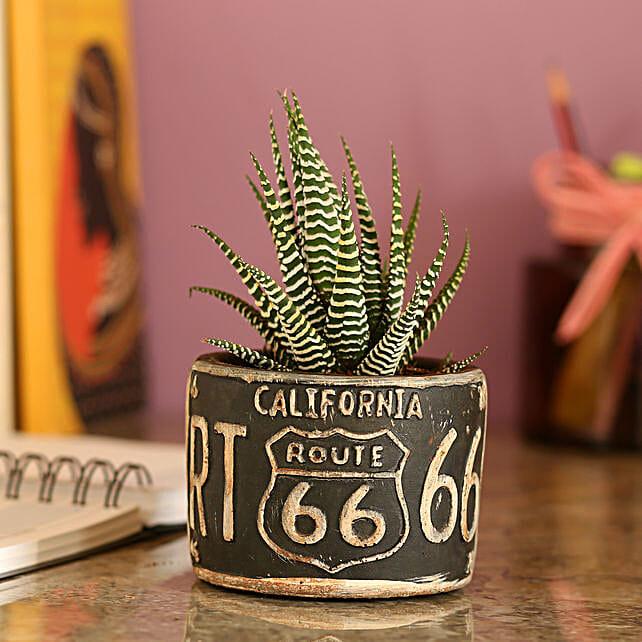 Howarthia Zebra Black Ceramic Pot: Rare Plants