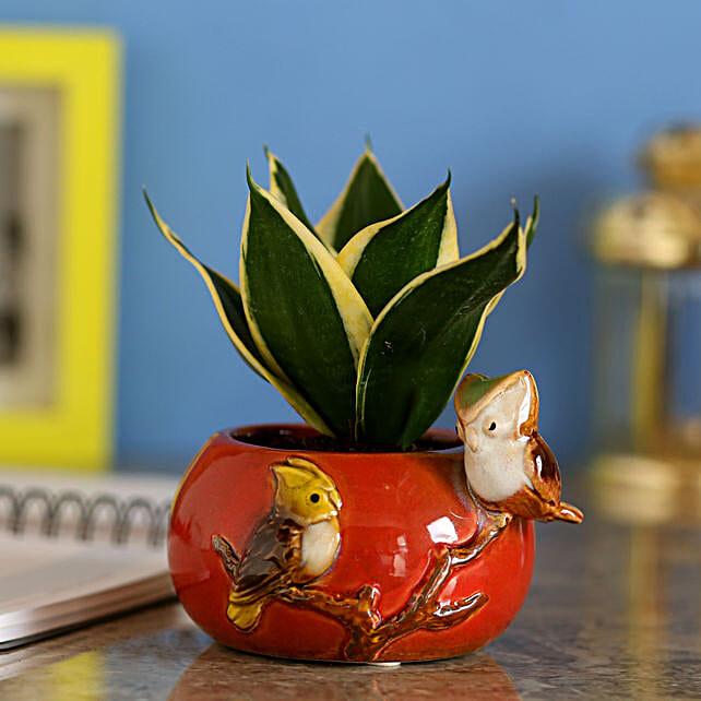MILT Sansevieria In Red Ceramic Pot: Cactus and Succulents Plants