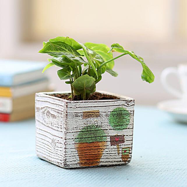 Pot of Syngonium Plant: Indoor Plants