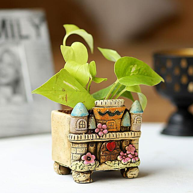 Potted Money Plant: Money Plant
