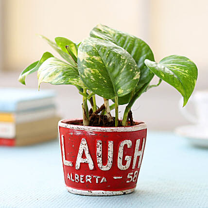 Red Pot of Money Plant: Gift for Father's Day
