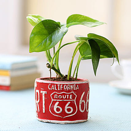 Red Potted Money Plant: Money Tree
