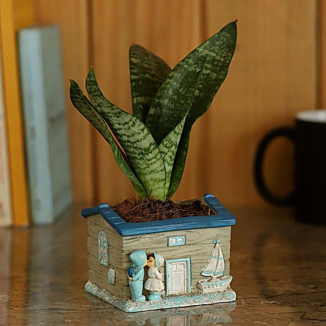 Sansevieria Plant in House Pot: Home Decor