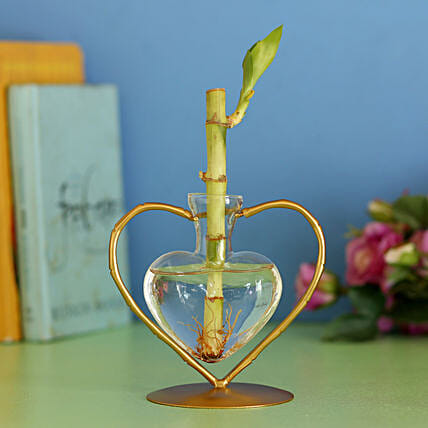 Bamboo Stick In Heart Frame: Buy Indoor Plants