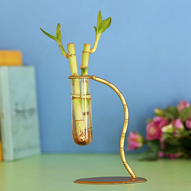 Bamboo Sticks In Designer Frame: Bamboo Plants