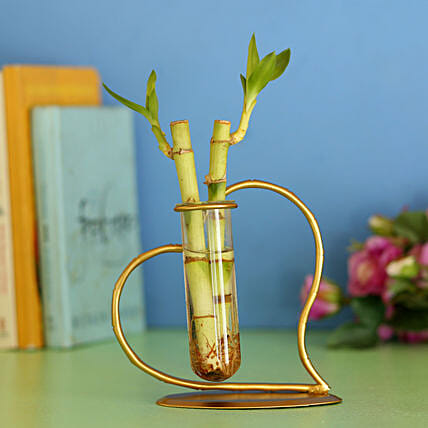 Bamboo Sticks In Heart Frame: Lucky Bamboo Plants