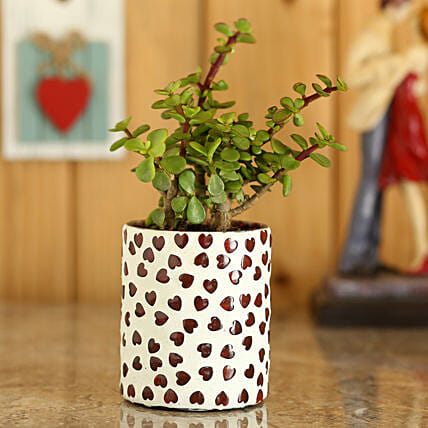 Jade Plant In White Hearts Mosaic Planter: Ornamental Plant Gifts