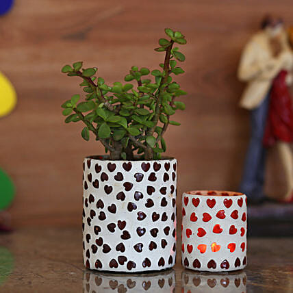 Jade Plant & White Hearts Votive Holders: Ornamental Plant Gifts